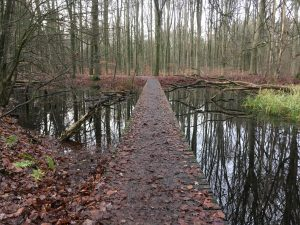 Waterloopbos loopbrug